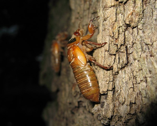 Nymphs crawling up a tree