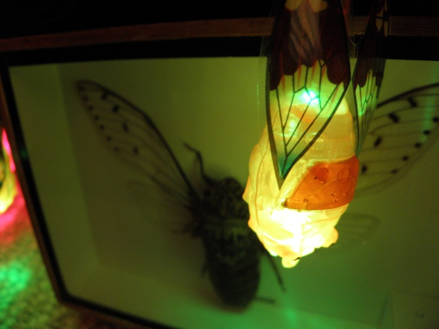 Cicada Christmas Lights