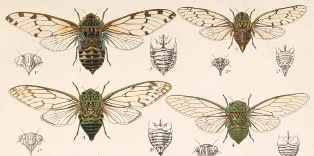 Insecta. Rhynchota. Hemiptera-Homoptera. Volume I (1881-1905) by W. L. Distant and W. W. Fowler