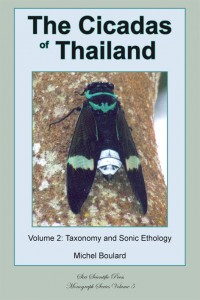 Cicadas of Thailand 2