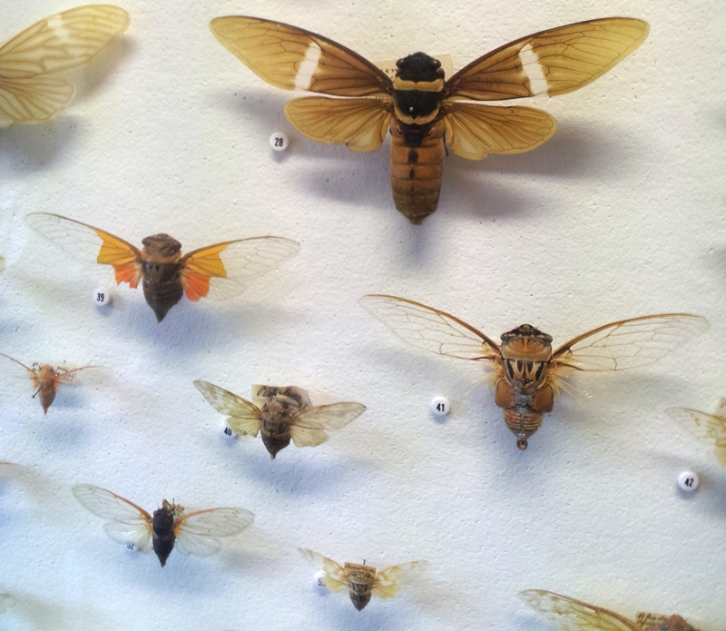 Wall of Insects