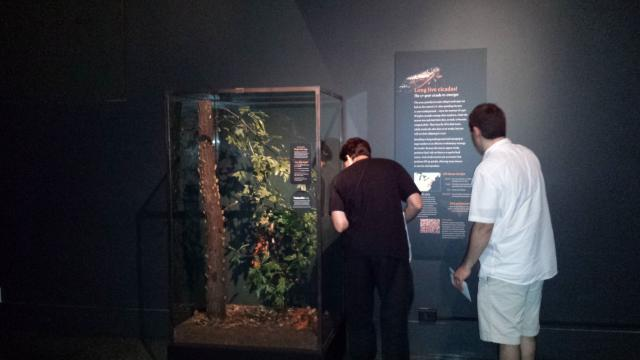 Roy Troutman and Elias Bonaros at the Periodical Cicada display at the American Museum of Natural History by Michelle Troutman