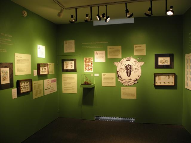 Staten Island Museum 17 Year Cicada Exhibit