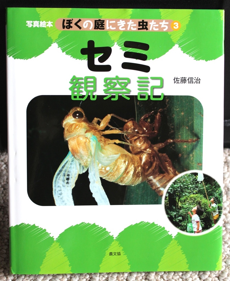 A Cicada Book from Japan