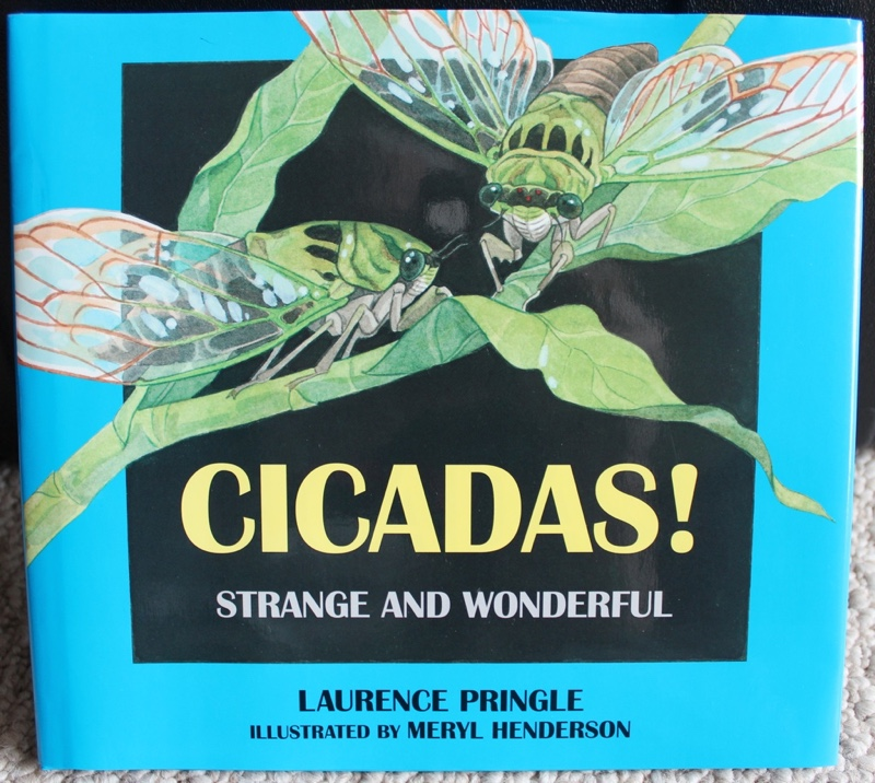 Cicadas Strange and Wonderful by Laurence Pringle illustrated by Meryl Henderson