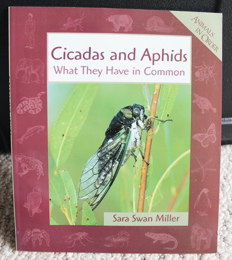 Cicadas and Aphids What They Have in Common by Sara Swan Miller