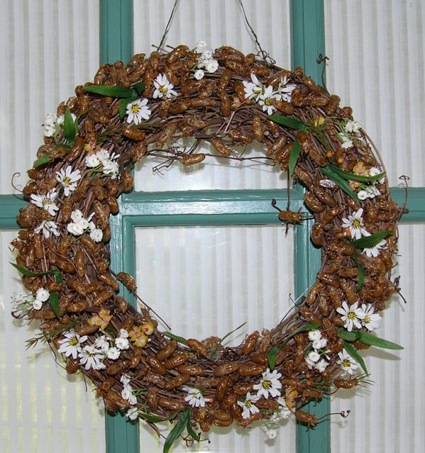 Cicada Christmas Wreath made by Jenny Pate.