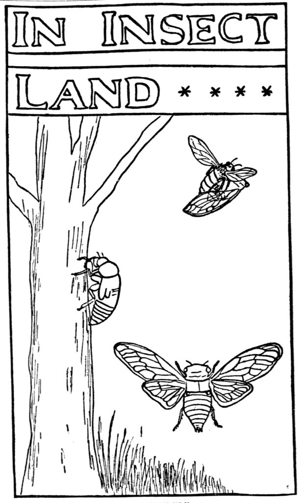 In Insect Land NY Tribune 1902