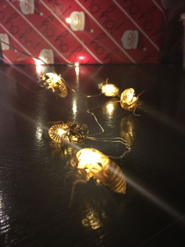 String of Cicada Lights