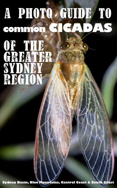 A photo guide to the common cicadas of the Greater Sydney Region