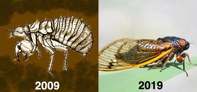 2009-2019 meme