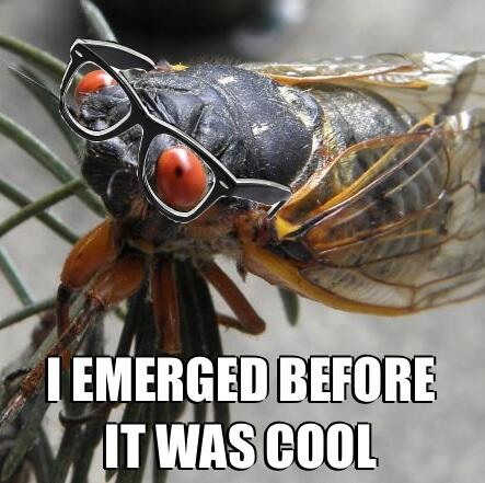 I emerged before it was cool!