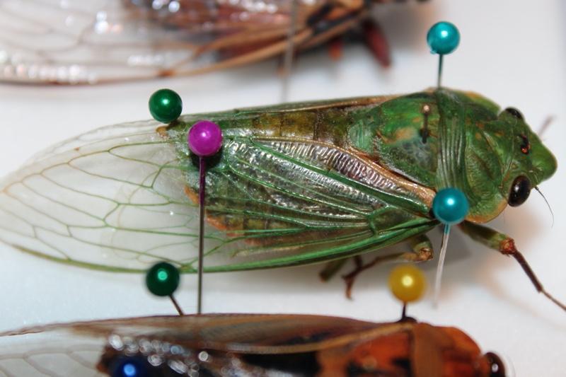 Green Grocer specimen