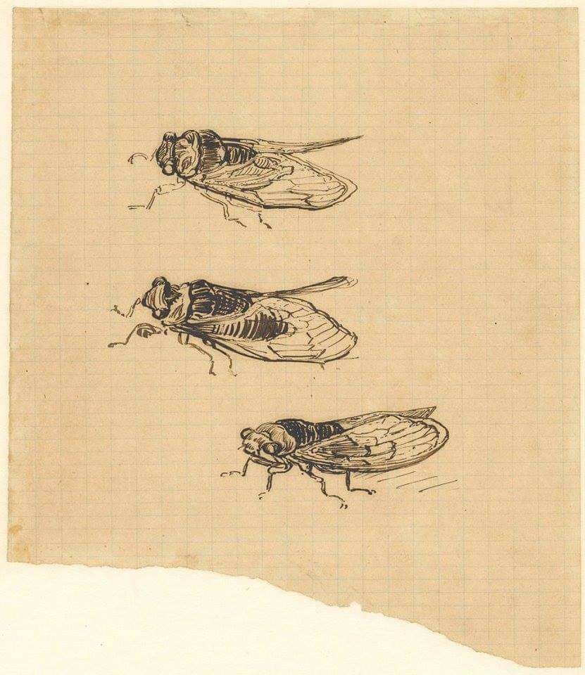 Vincent van Gogh's Three Cicadas