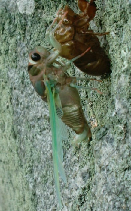 Gerry Neotibicen