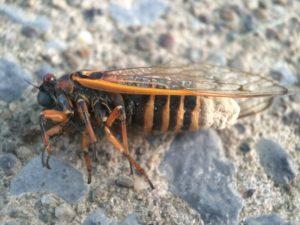 Cicada Fungus Infection by Matt Berger