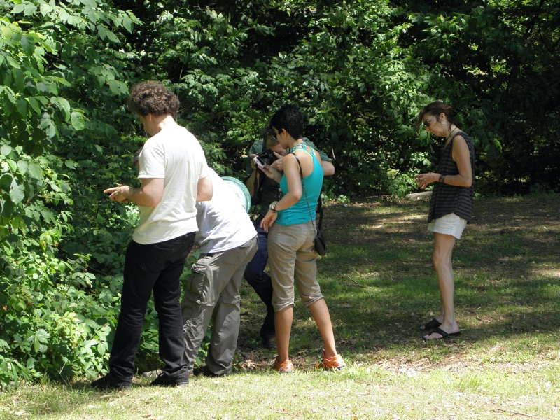 David Rothenberg, John Cooley, Asher Jay and others looking for cicadas in Roosevelt Park