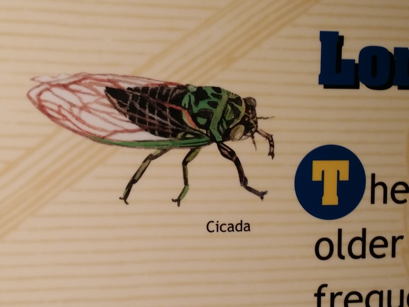 Hieroglyphic cicada illustration in Jackson Museum