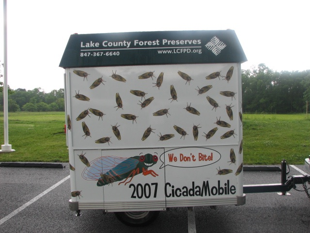 Cicada Mobile. Lake Count Forest Preserve outside of Chicago. Brood XIII. 2007.