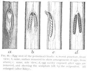 Marlatt 1907 Egg Nest Details