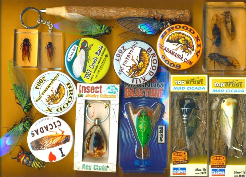 Various cicada ephemera