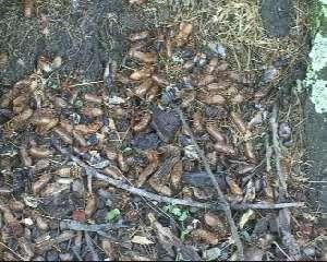 Cicada skins. Roy Troutman.