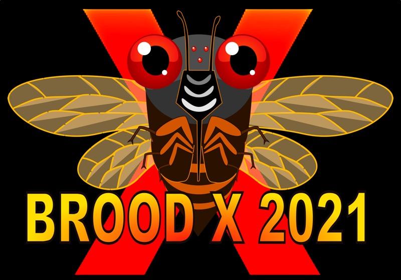 Brood X 2021