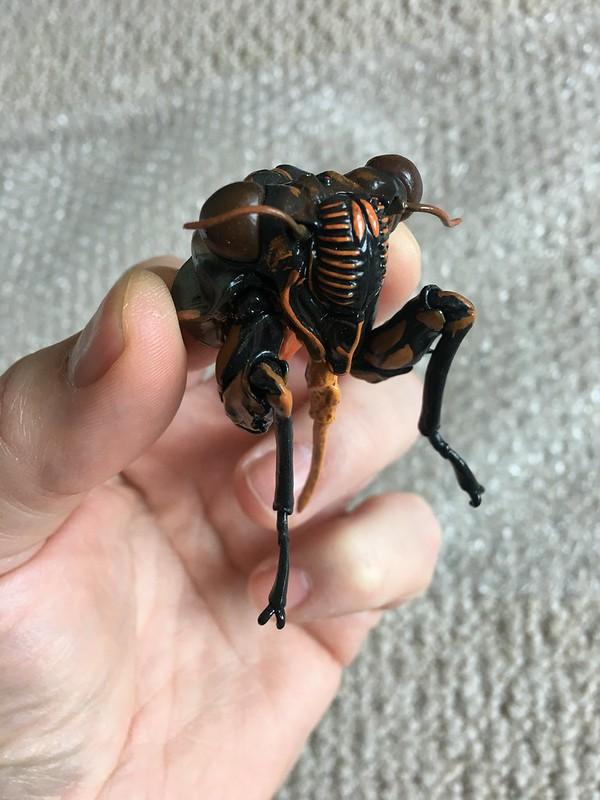 Cicada face magnet