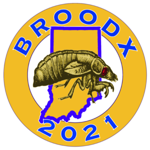Brood X Indiana