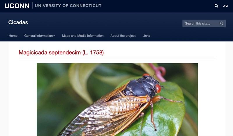 Cicadas @ UCONN