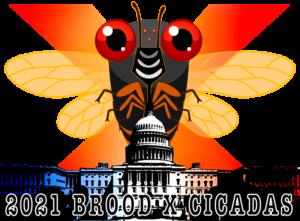 DC Brood X