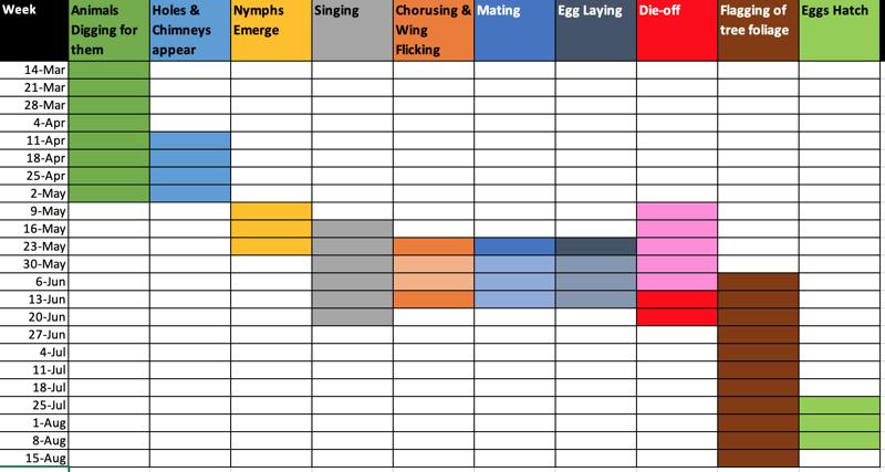 Example Emergence Timeline