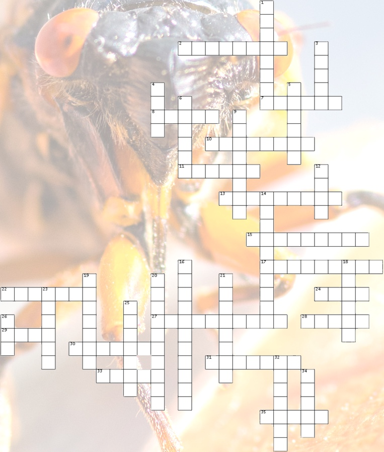 Cicada Cross Word Puzzle