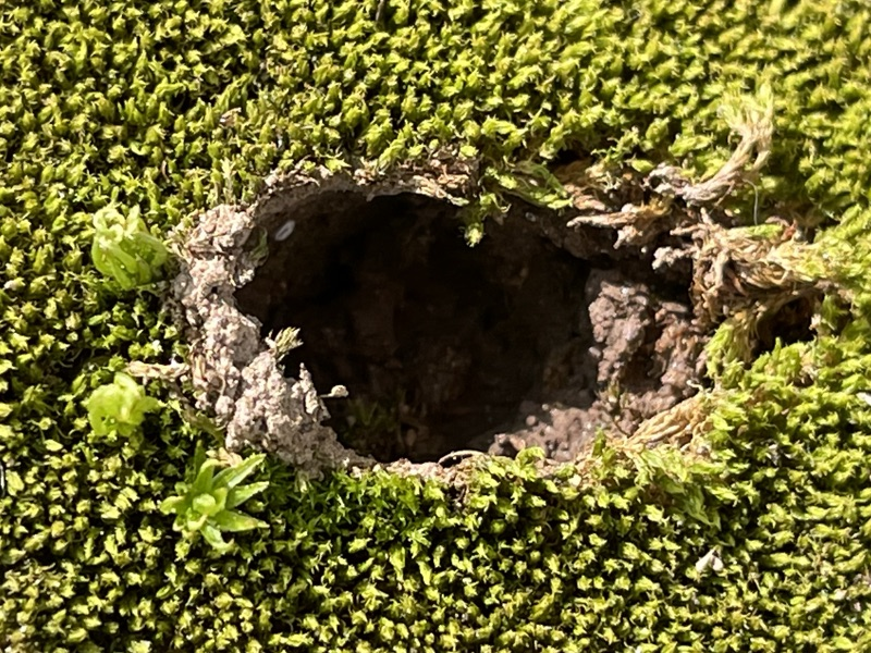 A hole in moss