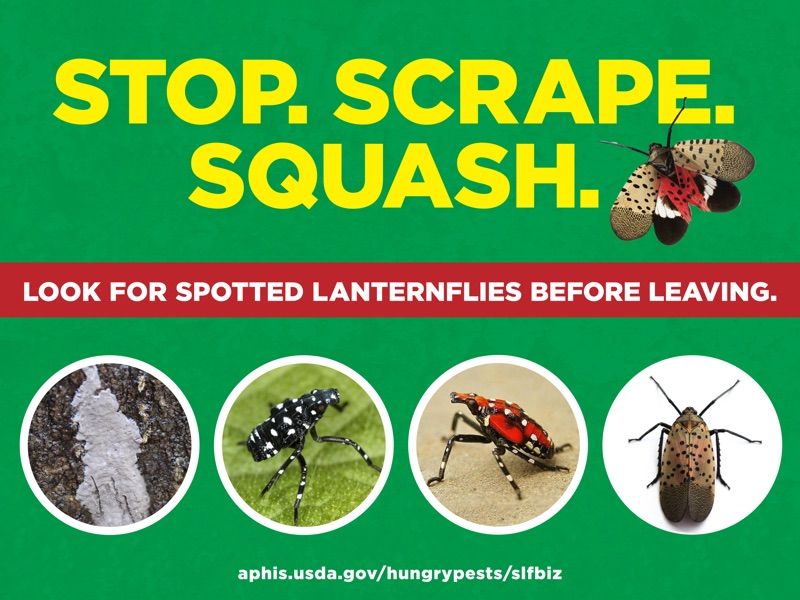Spotted Lanternfly Sign