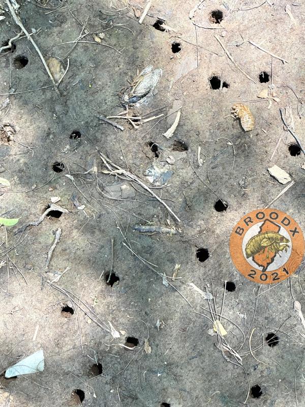 Loads of holes