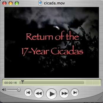 Return of the 17-Year Cicadas