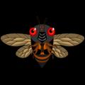 www.cicadamania.com